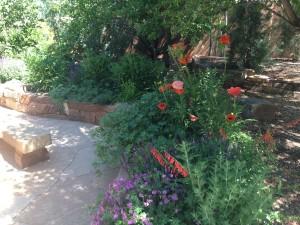 Shade Gardens In Santa Fe Santa Fe Gardening Blog