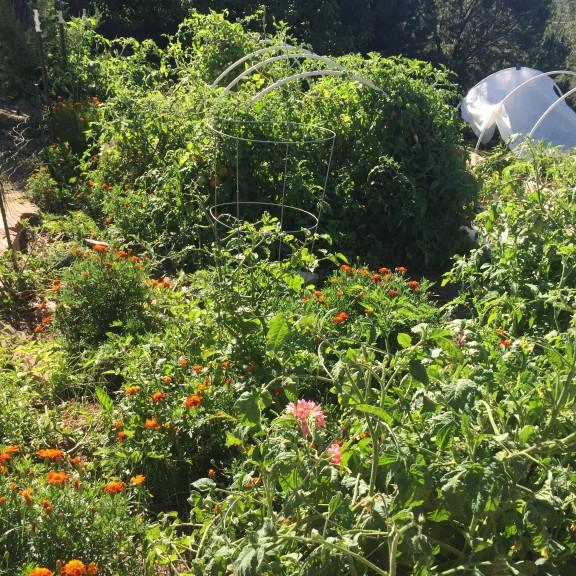The vegetable garden, go hunting!