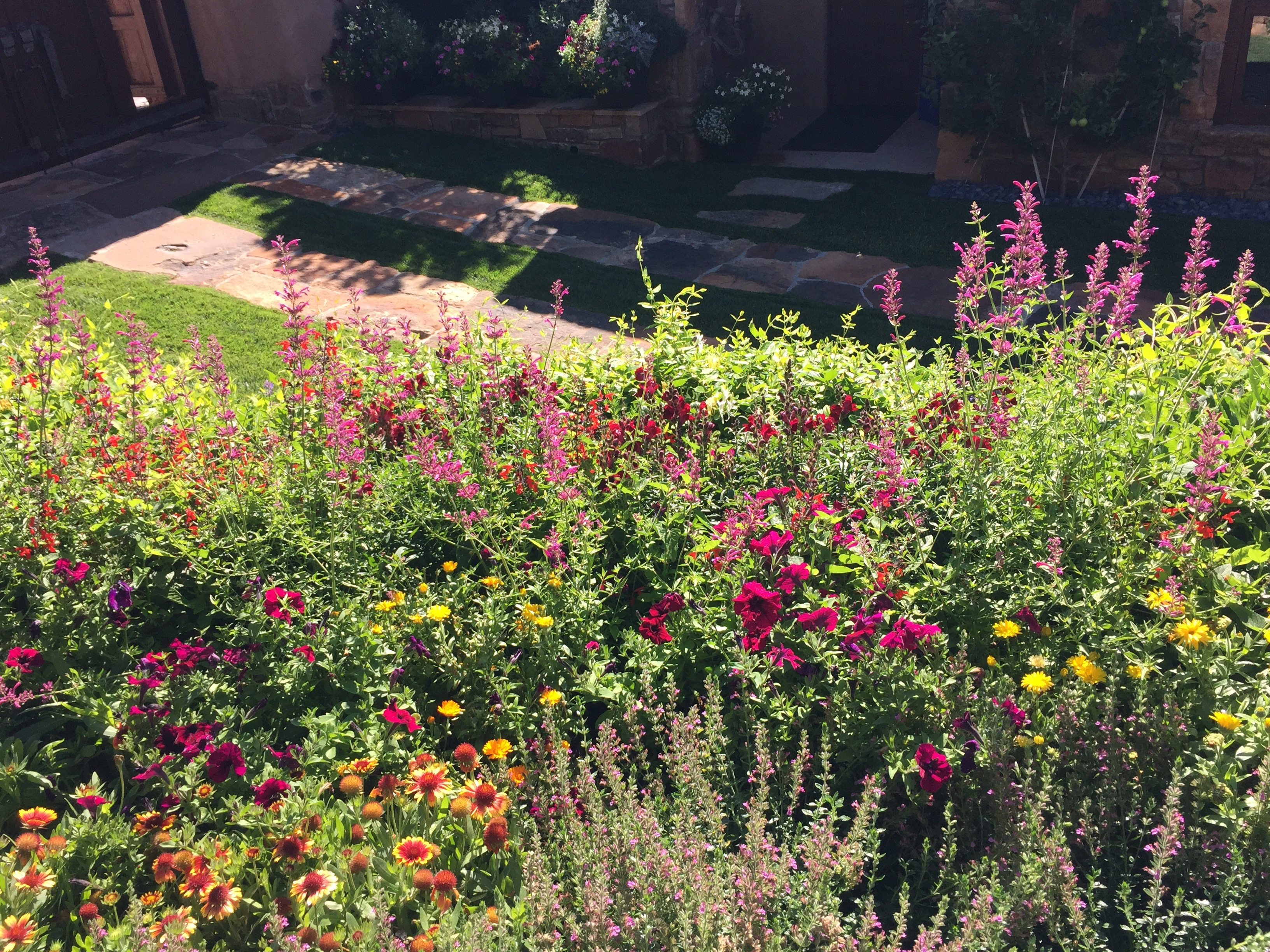 August Favorites In Santa Fe Santa Fe Gardening Blog